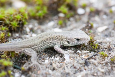Amfibieën- en reptielenonderzoek